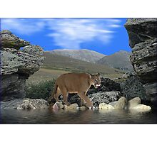 NA696-Water Hole Photographic Print