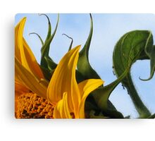 sunflower plus friends Canvas Print
