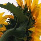 Sunflower the back of me by marijkasworld