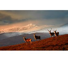 Stags at Strathglass Photographic Print