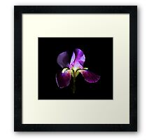 Majestic Iris Framed Print