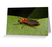Wasp (Orchid Dupe) Greeting Card