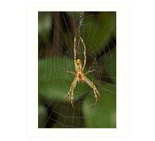 Spider in Web Art Print