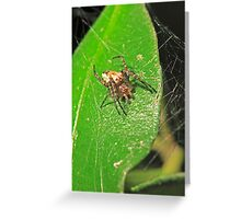 Spider (Jumping) Greeting Card