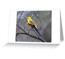 Regent Parrot Greeting Card