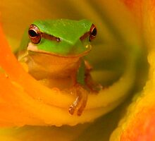 froggy bliss by Belinda Cottee