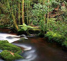 Nelson River, Tasmania by David Jamrozik