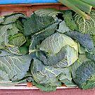 Cabbage pattern by Efi Keren