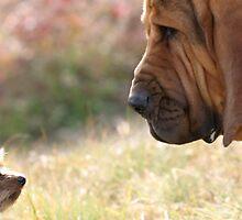 Confrontation by logomomo