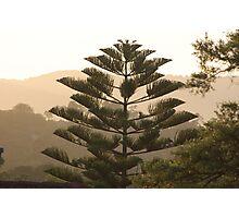 Sunrise - over towards Mt Dandenong - from Wonga Road  Photographic Print