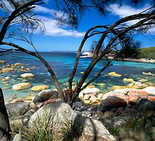 Blue Waters, Bay Of Fires, Tasmania by David Jamrozik