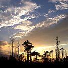 Sunset 003 by Cardet