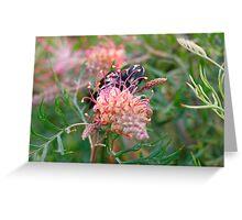 New Holland Honeyeater, Tasmania Greeting Card