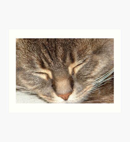 Close up of sleeping cat. Art Print