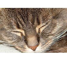 Close up of sleeping cat. Photographic Print