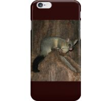 Possum In Tree, Hyde Park, Sydney, Australia iPhone Case/Skin