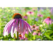 Mother Cone Photographic Print