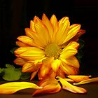 Bright Yellow Mum by LynnMarie