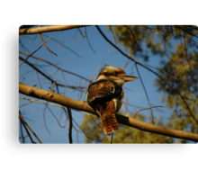 Kookaburra In Tree No.2 Canvas Print