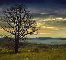The lonely Oak in the Winter by Antanas