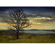 The lonely Oak in the Winter Photographic Print