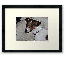 Puppy Momma Framed Print