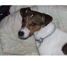 Puppy Momma Photographic Print