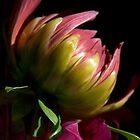 Bloom by Jamie Kirschner