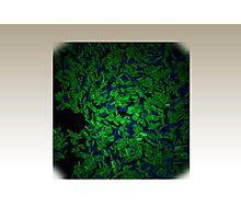 Photosynthetic Cyanobacteria cells Photographic Print