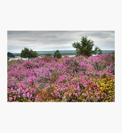 Dull Day at Arne Photographic Print