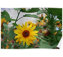 Artistic Sunflower Poster