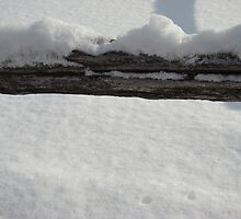 Winter fence detail by Albert1000