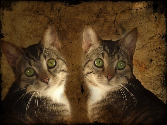 The Perfect Twin by © Kira Bodensted