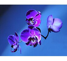 Orchid Surprise Photographic Print
