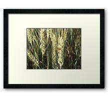 Lady Bug, Lady Bug Framed Print