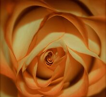 peach   by Jessica Karran