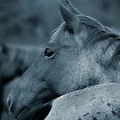Wild Horses by Tiffany Warren