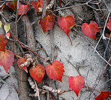Up the Wall: The Ivy Hearts. by Patricia Anne McCarty-Tamayo
