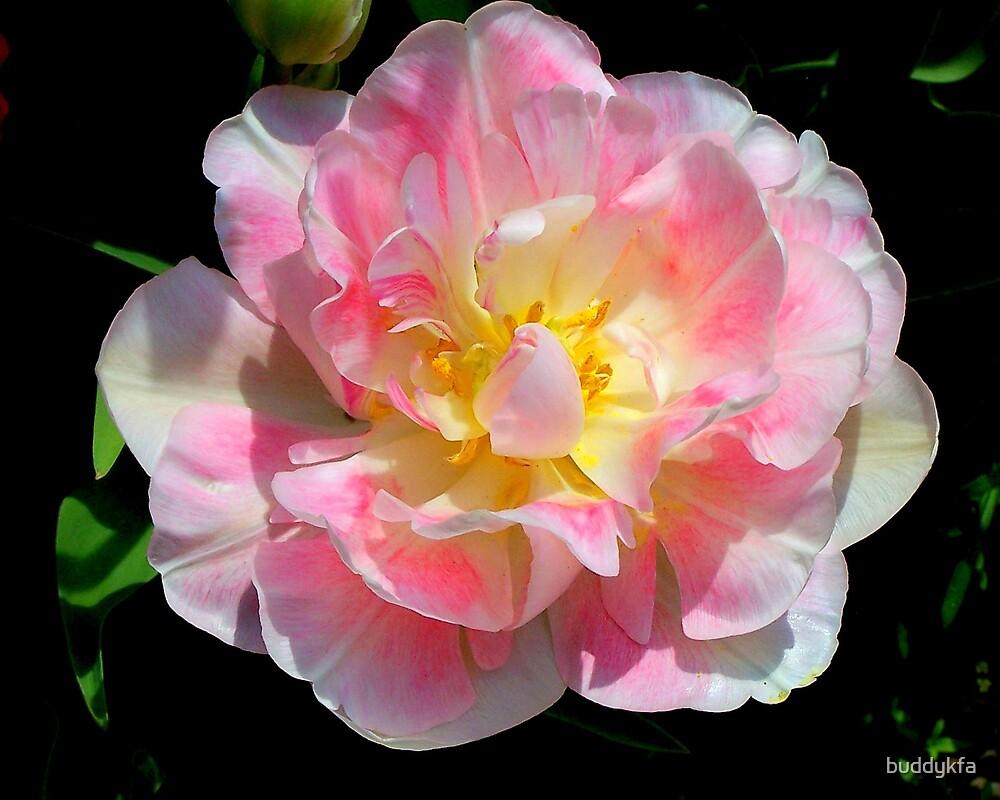 Pink & White Corsage by buddykfa