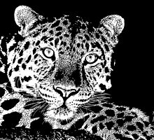 15 Chilled Out Leopard By Chris McCabe - DRAGAN GRAFIX by Christopher McCabe