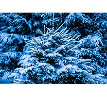 Winter Snow Christmas Tree Photographic Print