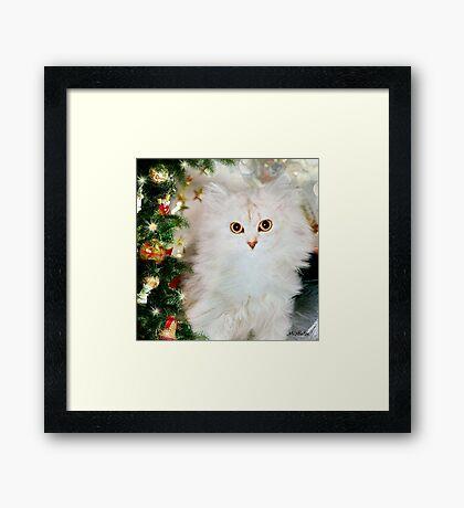 Mistletoe at Christmas Framed Print