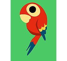 Macaw Photographic Print