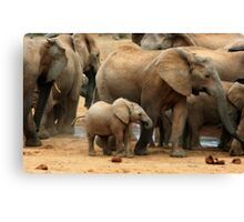 At The Waterhole Canvas Print