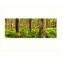 Karri Woodlands Art Print