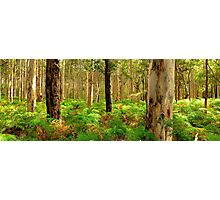 Karri Woodlands Photographic Print