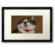 Lazy cat Framed Print