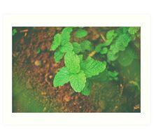 Fresh Mint v.2 Art Print