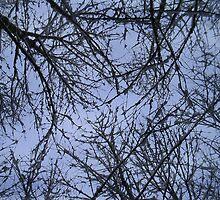 Snowy Sky by artordie