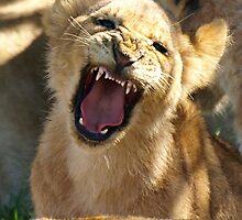 Baby Lion by David Odd